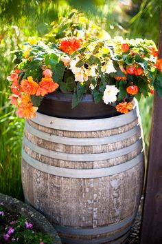 wine barrel planter