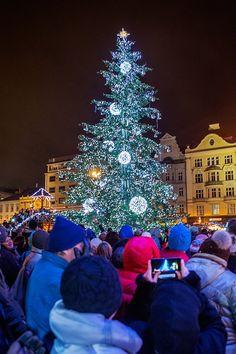 Plzeň se zahalila do vánoční atmosféry. Strom na náměstí svítí