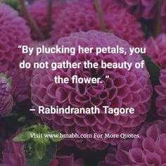 Flower Quotes And Sayings With Pictures