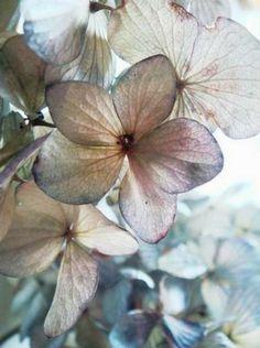 hydrangea ƈ ᴼ ᵀ ᵀ ᴬ ᴳ ᴱ Pastel Mint, Pastel Shades, Jewel Colors, Jewel Tones, Hydrangea Colors, Beautiful Collage, Scenery Photography, Beautiful Friend, Farm Gardens