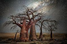 A fotógrafa norte-americana Beth Moon passou 14 anos a fotografar algumas das mais velhas árvores do mundo. E, quando o fez, utilizou dois cenários: o dia e o estrelado