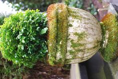 Moss covered urn - use butter milk to grow moss on urns and other garden elements