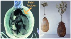 Bye-Bye Coffins! These Organic Burial Pods Will Turn You Into A Tree When You Die