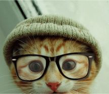 This cat lives in Richmond - Hipster Cat!