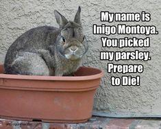 My name is Inigo Montoya. You picked my parsley. Prepare to die!