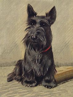 Pit Bull Terrier Dog Training: Lessons From An Expert - Champion Dogs Scottish Terrier Puppy, Bull Terrier Dog, Dachshund Puppies, Dog Rules, Vintage Dog, Dog Paintings, Dog Art, Dog Life, Dog Breeds