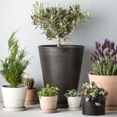 12 Best Lejlighed images in 2020 | Inside plants, Planting
