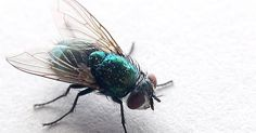Fliegen nerven dich? Finde heraus wie du gegen Fliegen vorbeugst, sie vertreibst und notfalls auch beseitigst. Wie baust du deine eigene Fliegenfalle?