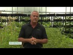 GardenSoxx in the GroExx Green Tunnel -- a Greenhouse and High Tunnel Combination - YouTube
