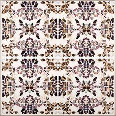 Butterfly Patterns 2 | Natural Curiosities