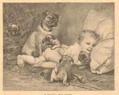 Child, Pug Dog, Puppies, Very Cute ! Vintage 1892 German Antique Art Print