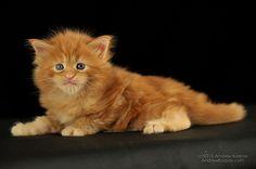 http://ambientcat.com/kittens-iguazu.shtml