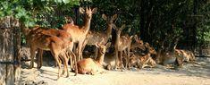 Camel, Explore, Animals, Animales, Animaux, Exploring, Animal Memes, Animal, Animais