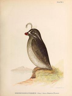 Contributions to the natural history of Alaska.. Washington,Govt. Print. Off.1886