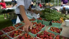 Access to ethical food often available only to the wealthy study says