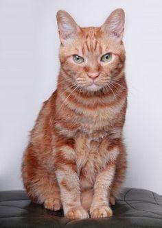 Garfield!!!
