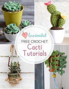 Cacti seem to be everywhere at the moment! Here at LoveKnitting HQ we handed them out at the office the other day and most people now have a cute little pl