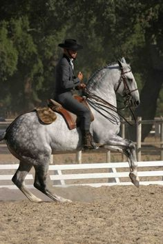 Grey Lusitano or Andalusian stallion Oxidado in Portugal