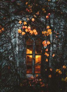 Gothic Aesthetic, Autumn Aesthetic, Witch Aesthetic, Autumn Witch, Autumn Cozy, Autumn Fall, Halloween Painting, Fall Halloween, Halloween Foods
