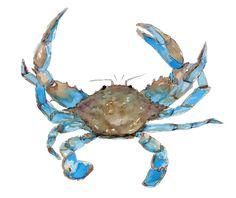 Blue Crab Print Maryland Crab Crab Art Beach House by HippieHoppy Crab Painting, Watercolor Painting, Crab Tattoo, Lemon Watercolor, Crab Art, Winsor And Newton Watercolor, Nautical Art, Tropical Art, Beach House Decor
