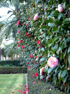 My grandmother loved her camellia bush.  I must have one in my yard somewhere.
