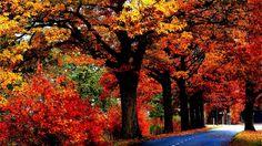 Fall Tree Autumn Nature