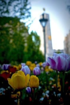#Budapest in #spring
