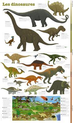 Le brachiosaure, le diplodocus, le tyrannosaure, l'iguanodon, l'oviraptor… tous les dinosaures préférés des enfants sont sur ce poster ludique et éducatif. Grâce à une approche éditoriale spécifique reposant sur une hiérarchie claire des images et des textes explicatifs, ce poster aborde cette thématique en profondeur. La curiosité des petits sera ainsi assouvie, de leurs 3 ans… […]