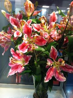 #Lily #Lilium #Parrot Pink; Available at www.barendsen.nl