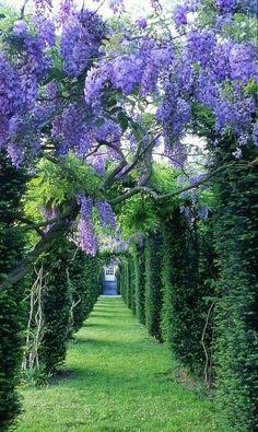 Wisteria tunnel, Château de La Ballue, France - so beautiful! It reminds me of a secret garden :) Beautiful World, Beautiful Gardens, Beautiful Flowers, Beautiful Places, Beautiful Gorgeous, Beautiful Roads, Beautiful Scenery, Amazing Places, The Secret Garden