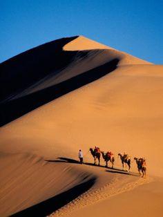 Camel Caravan at Sunset, Silk Road, China Premium-Fotodruck von Su, Keren