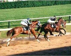 Triple Crown Winner Secretariat running in a race.