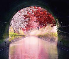 「琵琶湖疎水通船」乗船チケットの予約受付・販売開始!