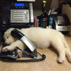 Reporting For Duty: Pups Hard At Work At Their Very Important Jobs - World's largest collection of cat memes and other animals Really Funny Dog Videos, Funny Dogs, Cute Dogs, Dogs With Jobs, Dog Words, Mini Doodle, Dog Search, Cute Dog Pictures, Dog List