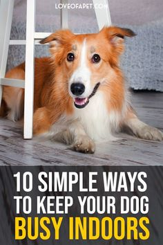 10 Simple Ways to Keep Your Dog Busy Indoors.  Discover easy ideas to do away with pet boredom. The aim is to keep your little furry friend physically fit and mentally active with our interesting activities. #KeepDogBusy #DogHOME Dog Enrichment, Dog Activities, Indoor Activities, Dog Games, Dog Houses, House Dog, Pet Care Tips, Training Tips, Dog Training
