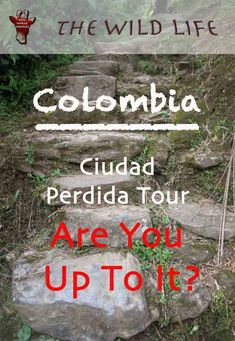 Ciudad Perdida Tour - Are You Up To It?Ciudad Perdida Tour is a four to six days hiking trail of 46km round trip through the jungle of the Sierra Nevada Mountains in Colombia. The Ciudad Perdida Colombia Trek leads over 1200 ancient steps to the Lost City