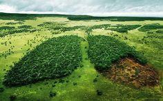"""Que savons-nous de cette soi-disant réalité ? """"Si nous ramenions les 456 milliard dannées de notre planète à une échelle de 46 ans lhomme existe que depuis à peine 4 heure notre révolution industrielle aurait commencé que depuis à peine une minute et dans cet intervalle dà peine une minute nous avons détruit plus de 50% des forêts de la planète.  Lhomme est lespèce la plus insensée. Il vénère un Dieu invisible et massacre une nature visible  sans se rendre compte que cette nature quil abat…"""
