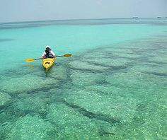 Sea Kayaking in Key West was great. Saw a lot of Jelly Fish!