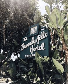 The beverly hills hotel sign and palms via serendipity ave fashion blog