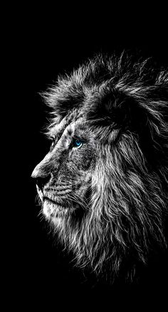 Here's the definition of consultative selling and what segregates it from conventional selling. Explore the definition of consultative selling. Wild Animal Wallpaper, Lion Wallpaper, Pop Art Wallpaper, Black Wallpaper, Lion Head Tattoos, Lion Tattoo, Dog Tattoos, Animal Tattoos, Sleeve Tattoos