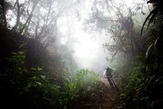 Rainforest Riding by Dan Barham
