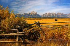 Photograph Lone Bison. Teton National Park. Wyoming. USA. by Barbara Jones on 500px