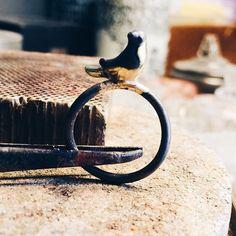 Lodder fugle på ringe.