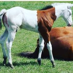 What a cool foal color pattern!