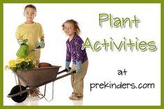 plants seeds activities