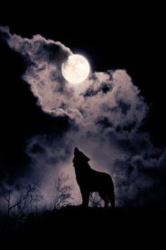 _escritormas Aullando sin ser lobo, escribiendo sin ser poeta, pero es que cuando veo la belleza de esa luna llena que brilla... Me recuerda a tus ojos, al reflejo de tu alma acariciándome, a ese tacto de tus dedos recorriendo planetas en mí, Y así escribo mis sentimientos, pensando en ti✒