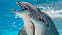 dolphins - Google Search