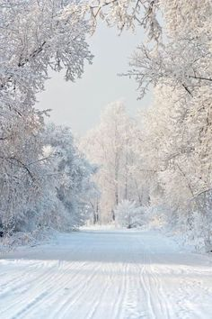 winter wonderland - snow - white - landscape