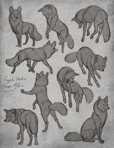 I really like these wolf poses. I really like these wolf poses. Animal Sketches, Animal Drawings, Cool Drawings, Horse Drawings, Drawing Poses, Drawing Tips, Drawing Sketches, Sketching, Manga Drawing
