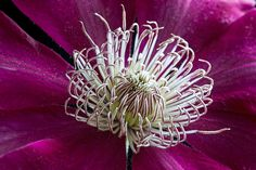 Clematis Centre by Antony Scott on 500px